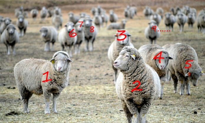 數羊的日子掰掰 培養10個好的睡眠習慣一覺到天亮